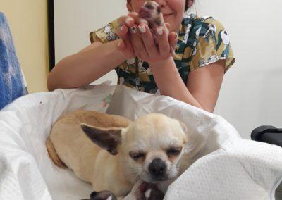 изкуствено осеменяване на кучета и котки / акушерство и гинекология