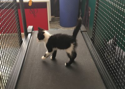 физиотерапия и рехабилитация на кучета и котки / фитнес пътека за животни