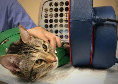 физиотерапия и рехабилитация на кучета и котки/ магнит