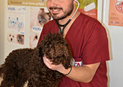 вътрешни болести кучета и котки