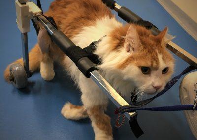 физиотерапия и рехабилитация на кучета и котки