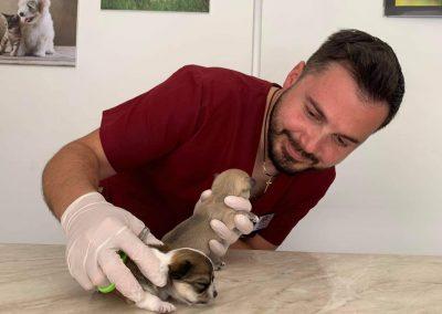 След секцио, но съм добре, Ветеринарна клиника Ита вет, София, Лозенец, изкуствено осеменяване на кучета