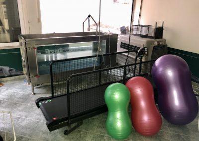 физиотерапия за животни, Пълно оборудване, клиника за рехабилитация - София, хидротерапия, кинезитерапия,