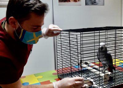 Екзотика - папагали и други птици, ветеринарна клиника Ита вет София