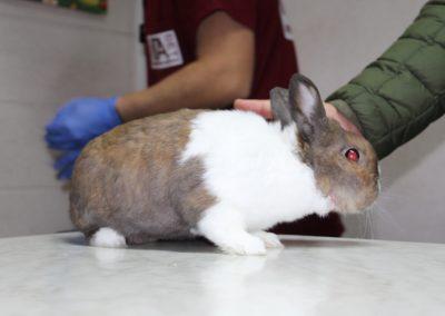 Ветеринарна клиника Ита вет екзотични животни София