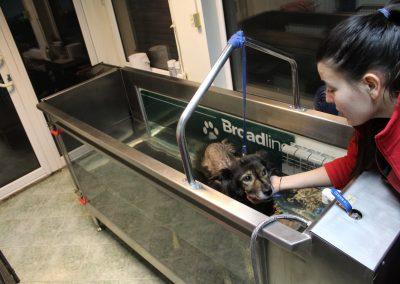 хидротерапия куче, физиотерапия София животни